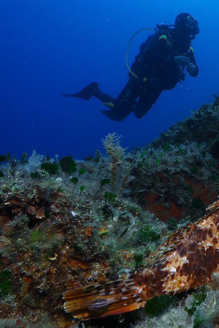 Diving-pelion-levantes